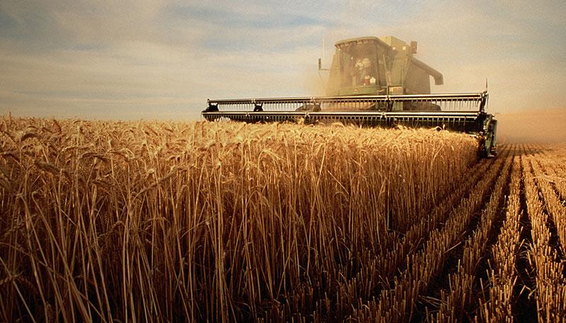 Agricultura a crescut cu 12,5% in 2017