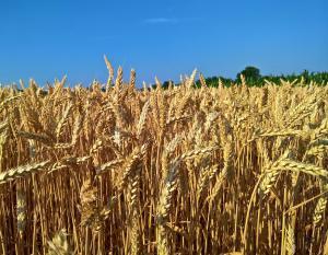 Programe de promovare a produselor agricole, cu fonduri UE