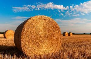 Locuri de munca in domeniul agricol. Romanii au ocazia de a munci in strainatate