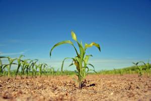 Garantarea Economiei Rurale, o solutie completa de finantare pentru proiectele de dezvoltare